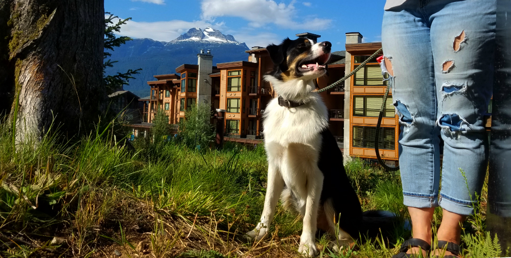 dog in Revelstoke Mountain Resort village
