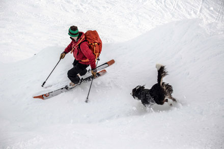 CARDA dog & handler skiing